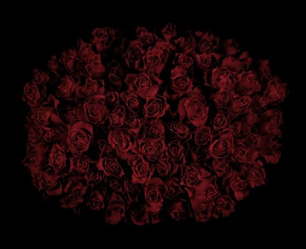 <em>Roses III</em>, 2009