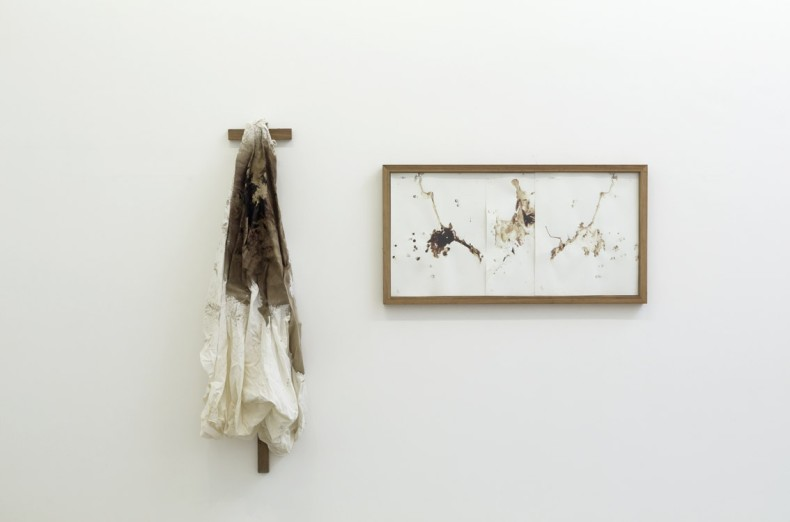karin lambrecht animal, 2004