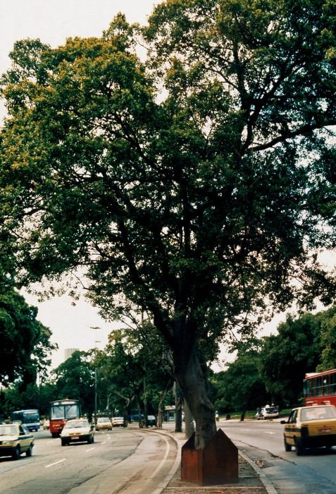 casa/árvore/rua, 1996