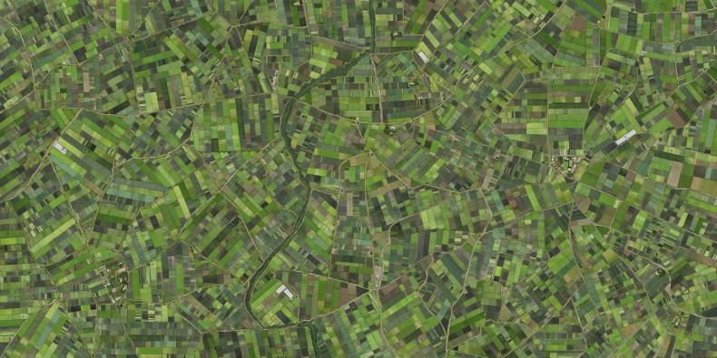 Verde, da série Coletivos, 2012