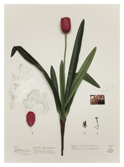 alberto baraya, expedición shanghai: herbário de plantas artificiais, loto elefante, 2012