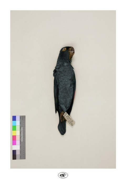 alberto baraya, la fabula de los pájaros, 2011