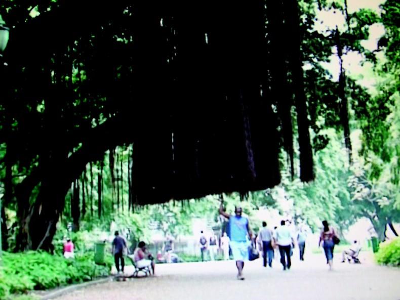 marcos chaves, a árvore que caminha, 2008