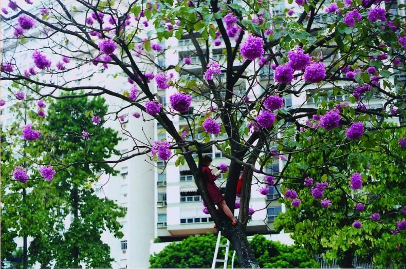 Brígida Baltar Em uma árvore em uma tarde, 2001 foto-ação / photo-action 27 x 39 cm / 10.6 x 15.4...
