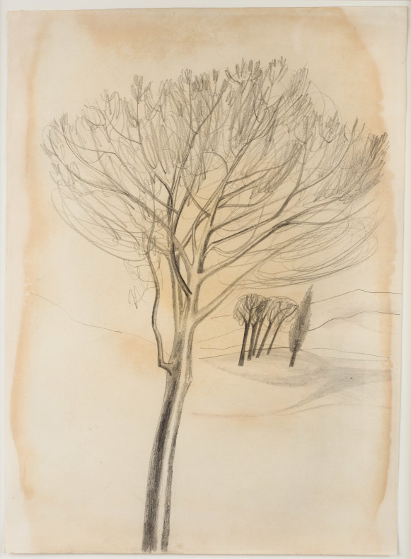 Ben Nicholson, 1955 (trees, Tuscany), 1955