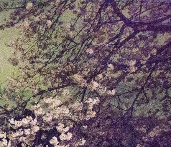 <div class=&#34;artist&#34;><strong>Ori Gersht</strong></div> (b. 1967) <div class=&#34;title&#34;><em>Chasing Good Fortune, Tokyo Imperial Memories, Speck 03</em>, 2010</div> <div class=&#34;medium&#34;>Archival pigment print mounted on aluminium</div> <div class=&#34;dimensions&#34;>40 x 46 cm; (15 3/4 x 18 1/8 in.)</div> <div class=&#34;edition_details&#34;>Edition of 8 + 2 AP</div>