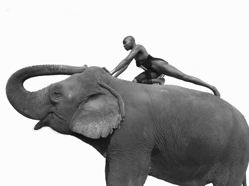 Sylvie Blum, Eromomen and the Elephant II, 2018