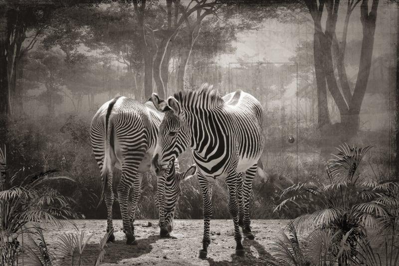 Jan Gulfoss, Zebres de Grevy devant un Décor, c. 2013-2016