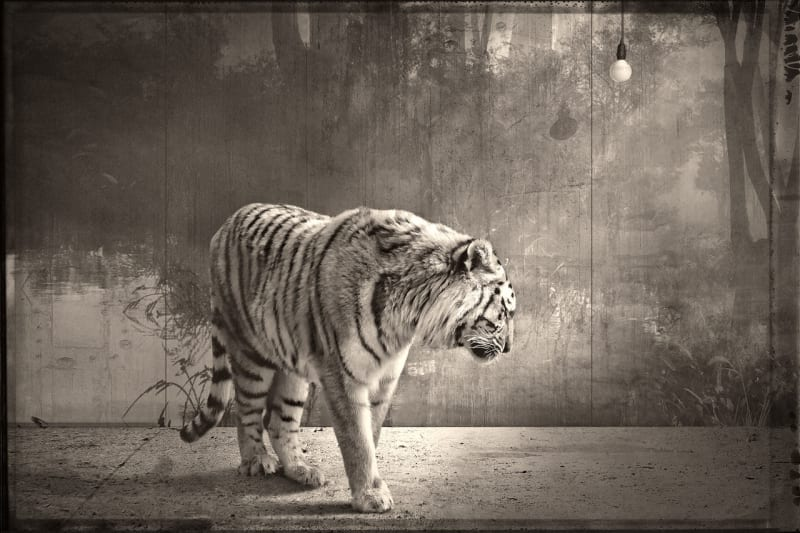Jan Gulfoss, Tigre et ampoule, c. 2013-2016