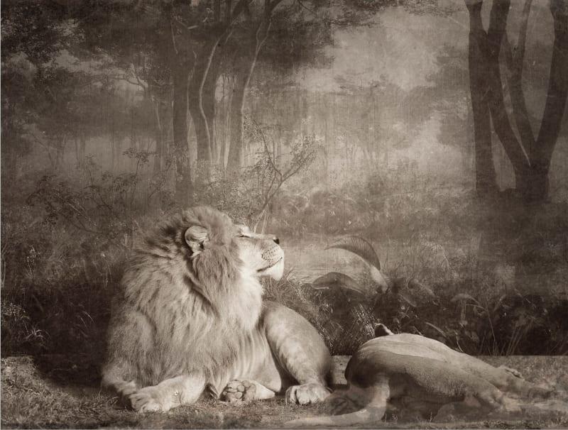 Jan Gulfoss, Lions et Ampoule, c. 2013-2016