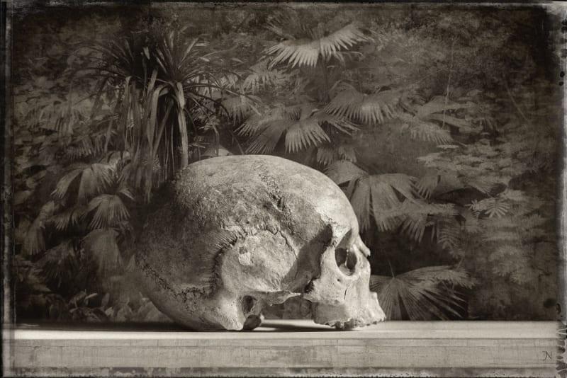 Jan Gulfoss, Jungle Skull, c. 2013-2016