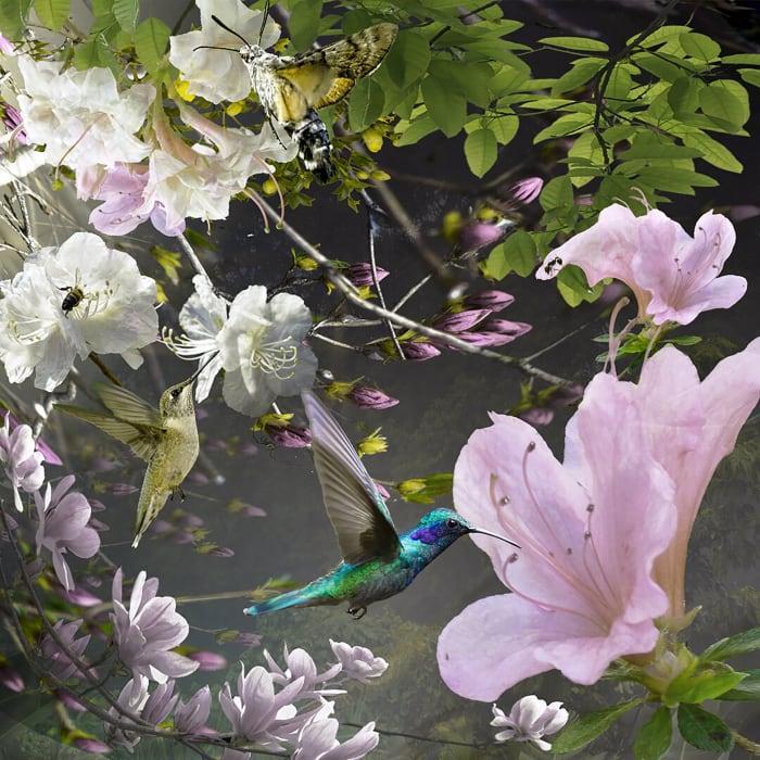 Ryn Clarke, Azaleas and Hummingbirds, 2020