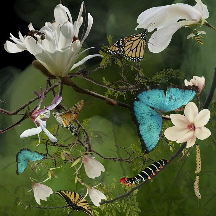Ryn Clarke, Butterfly Magnolias, 2020