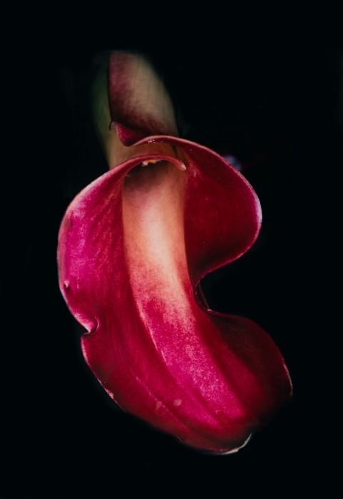 Untitled (Flower Rondo)