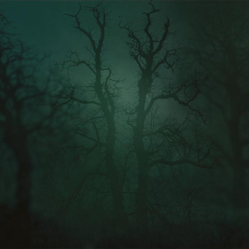 Nicholas Hughes, In Darkness Visible no. 14 [Verse I], 2007