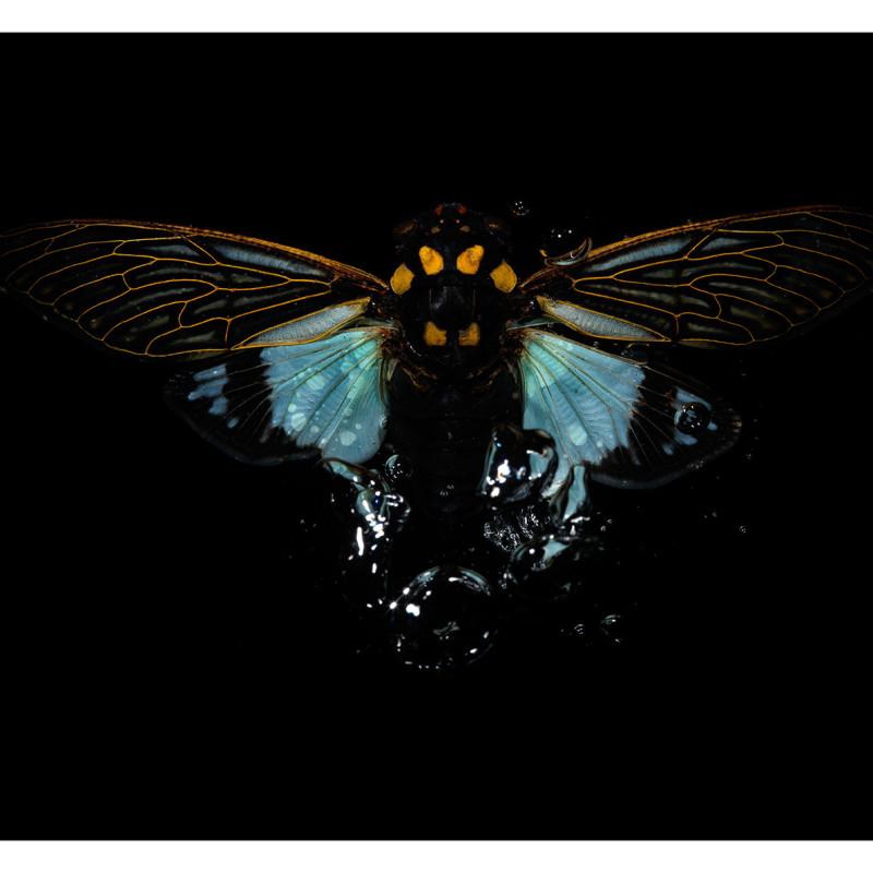 Alexander James Hamilton, Swarm [0571], 2009