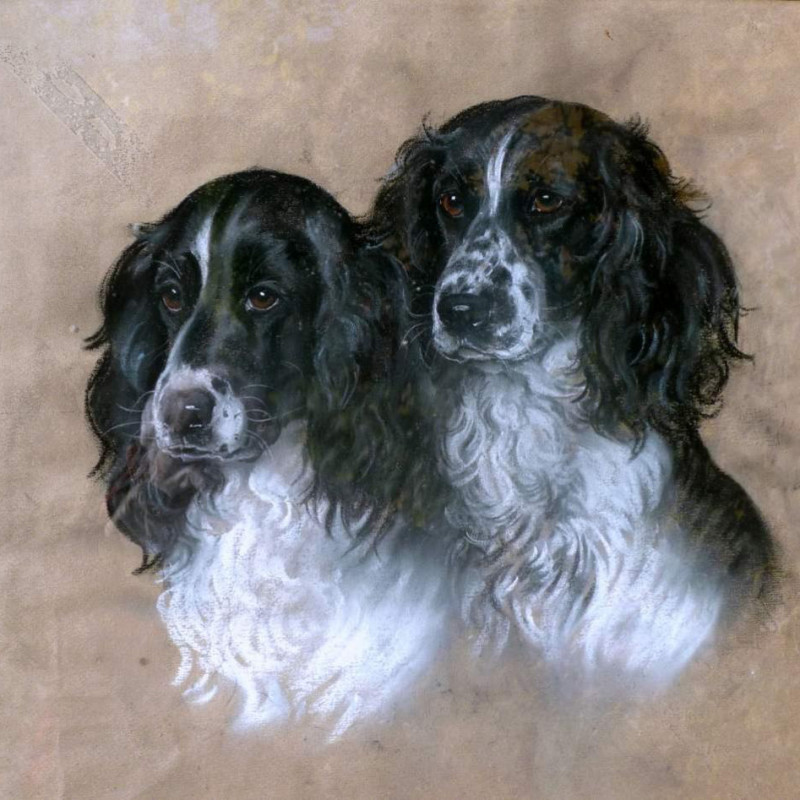 Marjorie Cox - Swallow and Simeon - two Springer Spaniels