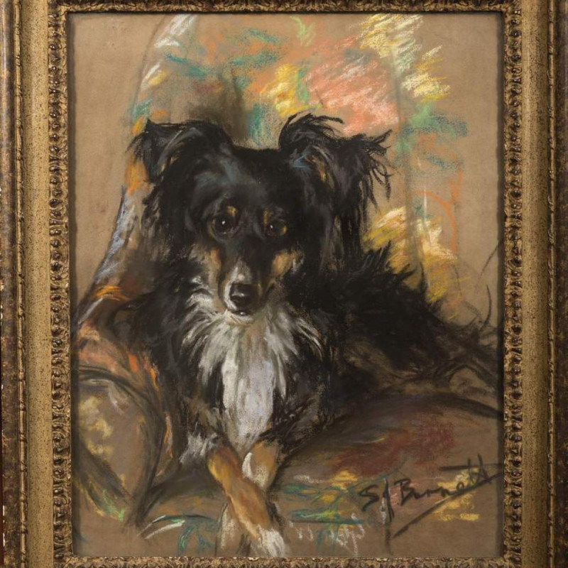 S J Burnett - Collie