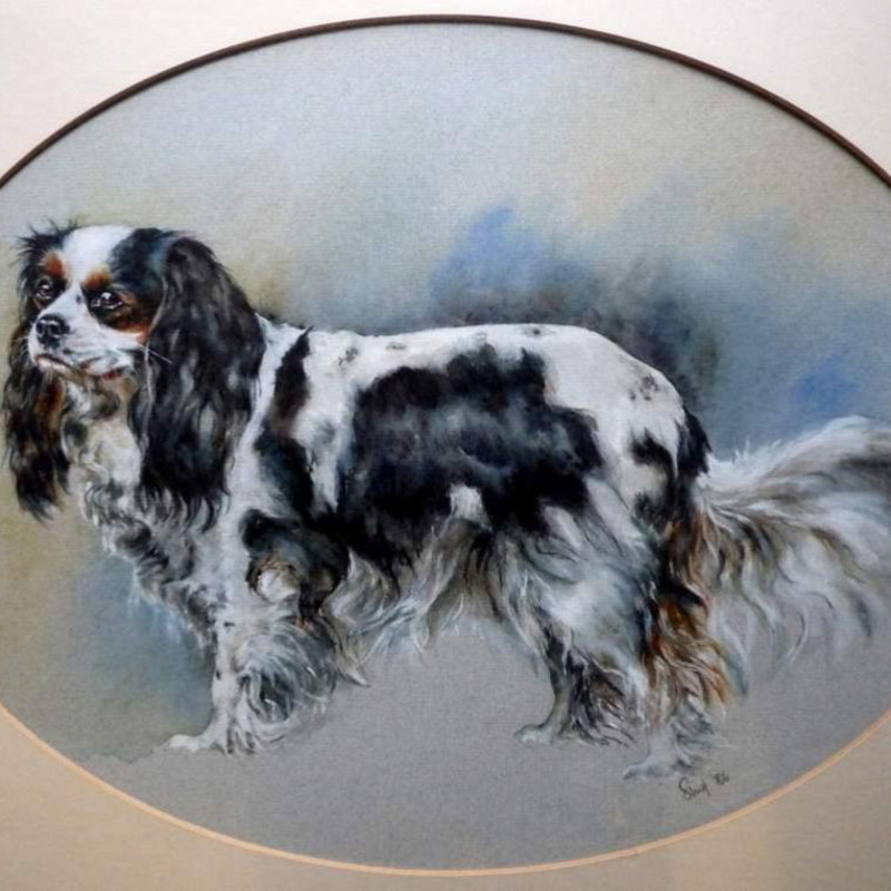 King Charles Spaniel - 'Sally' - King Charles Spaniel