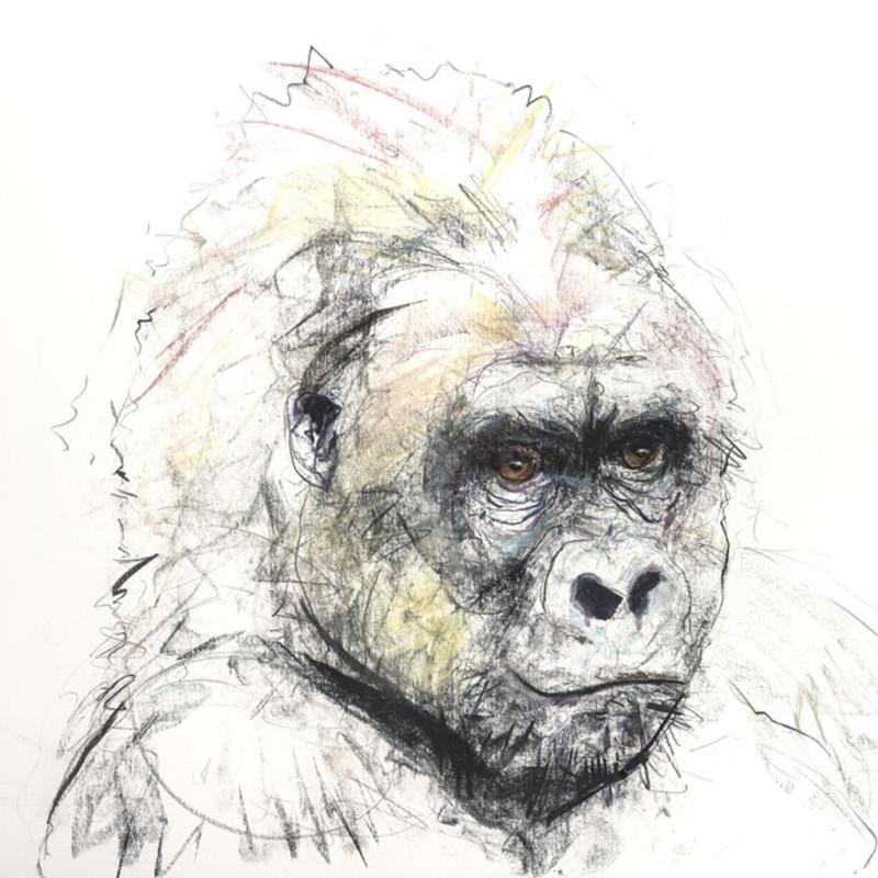 Dave White, Gorilla V