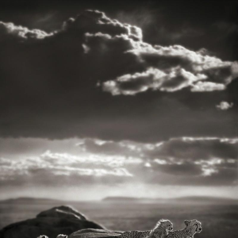 Nick Brandt, Cheetah & Cubs Lying on Rock, Serengeti , 2007