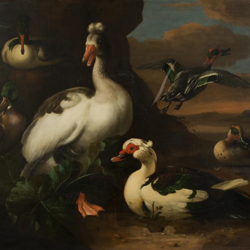 Melchior d'Hondecoeter, Water Fowl, 1636-1695