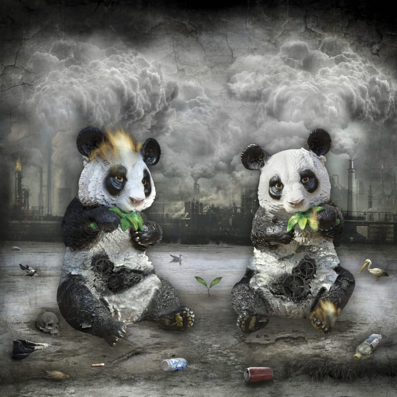 Marcin Owczarek, THE LAST PANDAS ON EARTH, 2014