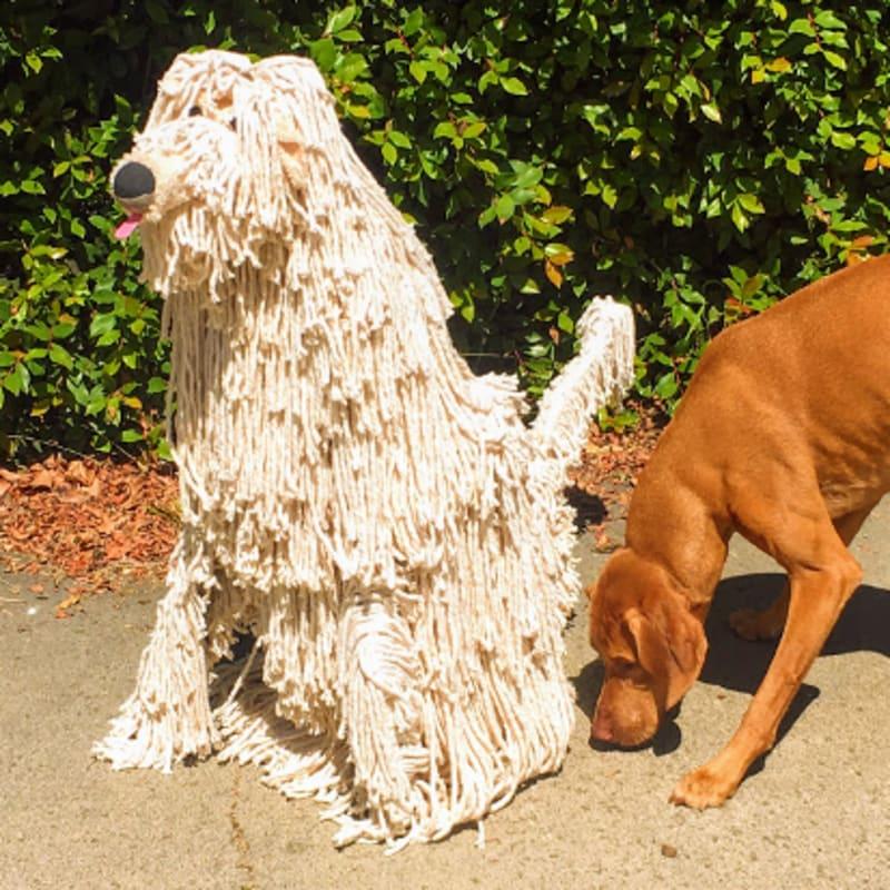 Max Roemer, Mops, as Dog, 2021