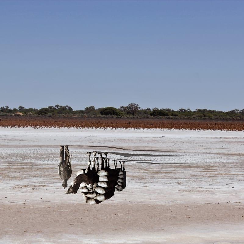 Archana Hande, The Golden Feral Trail Location: Laverton, Western Australia Wangai Land Indian Ocean Trade, 2013-14