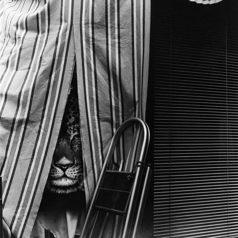 Asako Narahashi, Untitled, from Nu-e (leopard), 1994
