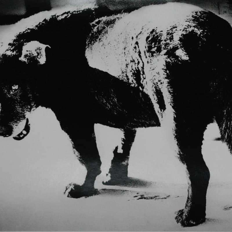 "Daido Moriyama, Dog Town from ""Searching Journeys 3"", Misawa, Aomori, 1971"