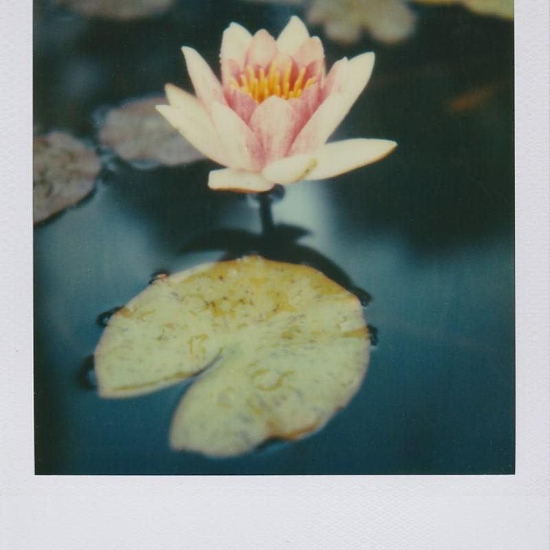 Marion Dubier-Clark Nénuphar Polaroid 7,7 x 7,9 cm 2.76 x 2.76 in Dim. papier: 10,7 x 8,8 cm