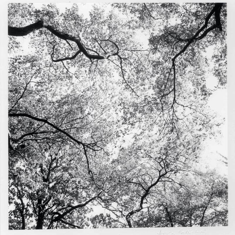 Harry Callahan Ansley Park, Atlanta Tirage gélatino-argentique d'époque, réalisé par l'artiste 14,7 x 15 cm