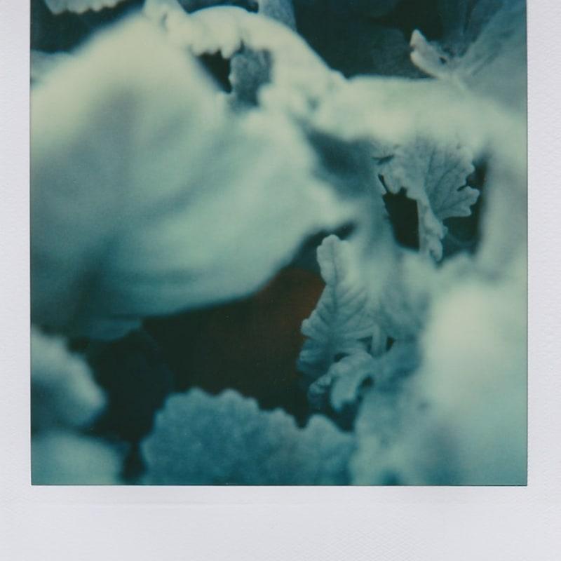 Marion Dubier-Clark Winter Polaroid 7,7 x 7,9 cm 2.76 x 2.76 in Dim. papier: 10,7 x 8,8 cm