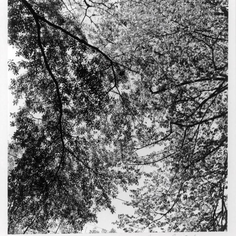 Harry Callahan Ansley Park, Atlanta Tirage gélatino-argentique d'époque, réalisé par l'artiste 14.7 x 15 cm
