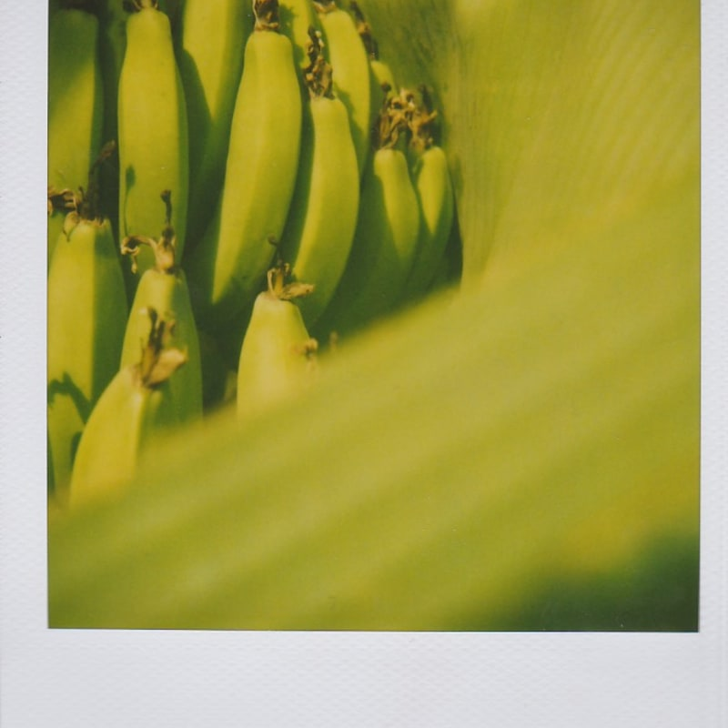 Marion Dubier-Clark Bananas Polaroid 7,7 x 7,9 cm 2.76 x 2.76 in Dim. papier: 10,7 x 8,8 cm