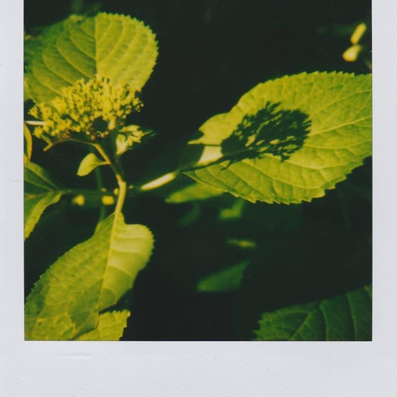 Marion Dubier-Clark Shadow Polaroid 7,7 x 7,9 cm 2.76 x 2.76 in Dim. papier: 10,7 x 8,8 cm