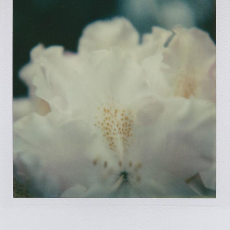 Marion Dubier-Clark Subtil white Polaroid 7,7 x 7,9 cm 2.76 x 2.76 in Dim. papier: 10,7 x 8,8 cm