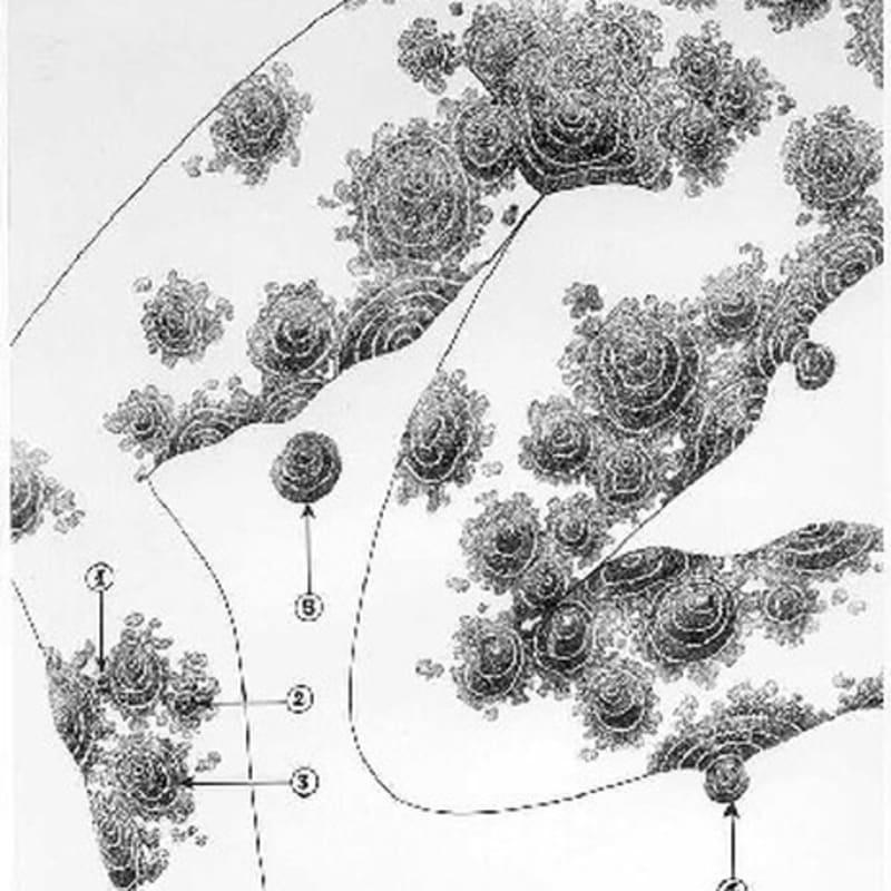 Robert Malaval Anne : genou gauche - Pubis dessin à l'encre de chine sur papier 64 x 50 cm