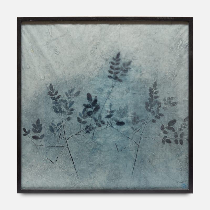 Parme Baratier  Indigofera Tinctoria I, 2018  Indigofera Tinctoria pigment on mulberry paper  Framed: 60 x 60 cm