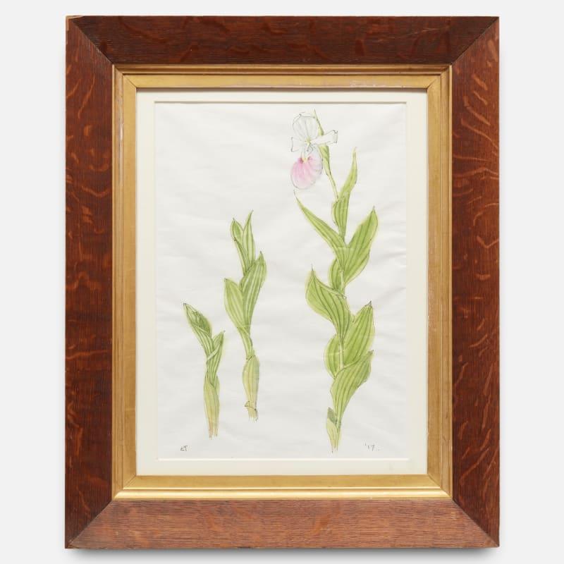 Emma Tennant  Cypripedium Reginae, 2017  Watercolour and ink on paper  Framed: 48 x 40.5 cm