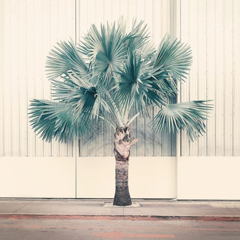 Nadia Attura, Palm Park