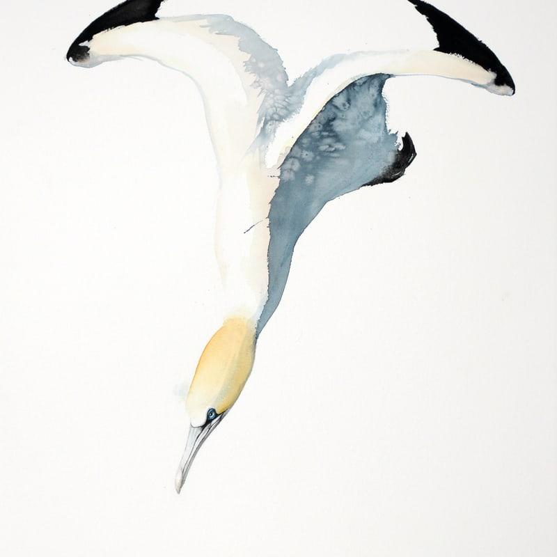 Karl Martens  GANNET 4 (UNFRAMED)  Watercolour  100 x 70 cm  39 3/8 x 27 1/2 in