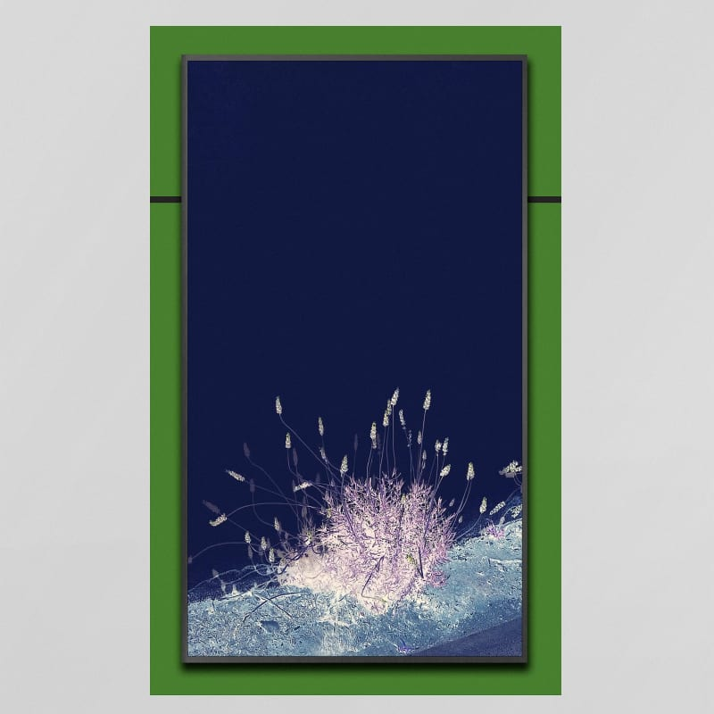 """Owen Kydd Summer, 2018 Adhesive pigmented print with video on UHD display 32"""" x 53"""" edition of 3"""