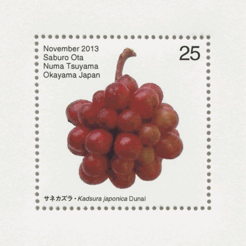 Saburo Ota Seed Plant: Katsura Japonica Dunal 2013