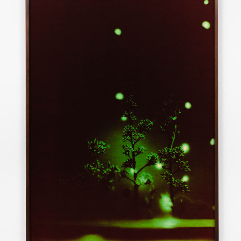 André Feliciano, vaga-lumes fotográficos, série prospect park 4, 2020