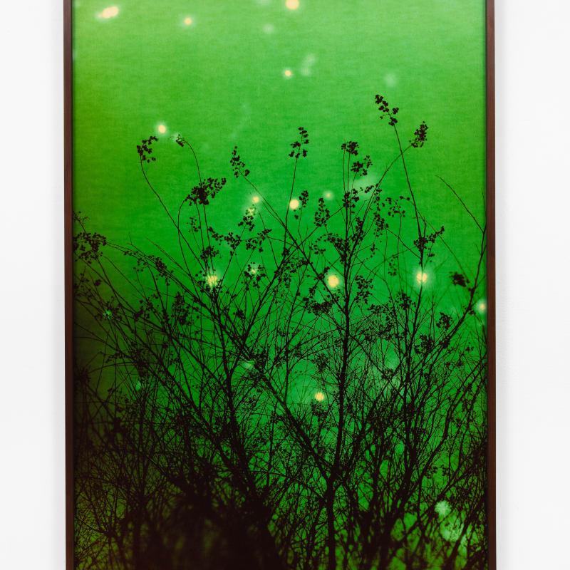 André Feliciano, vaga-lumes fotográficos, série prospect park 8, 2020