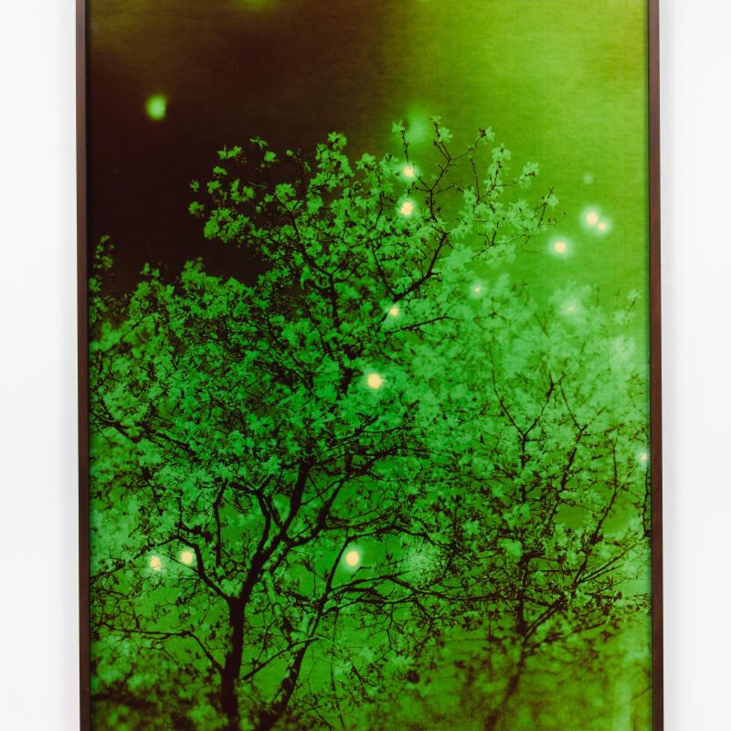 André Feliciano, vaga-lumes fotográficos, série prospect park 6, 2020