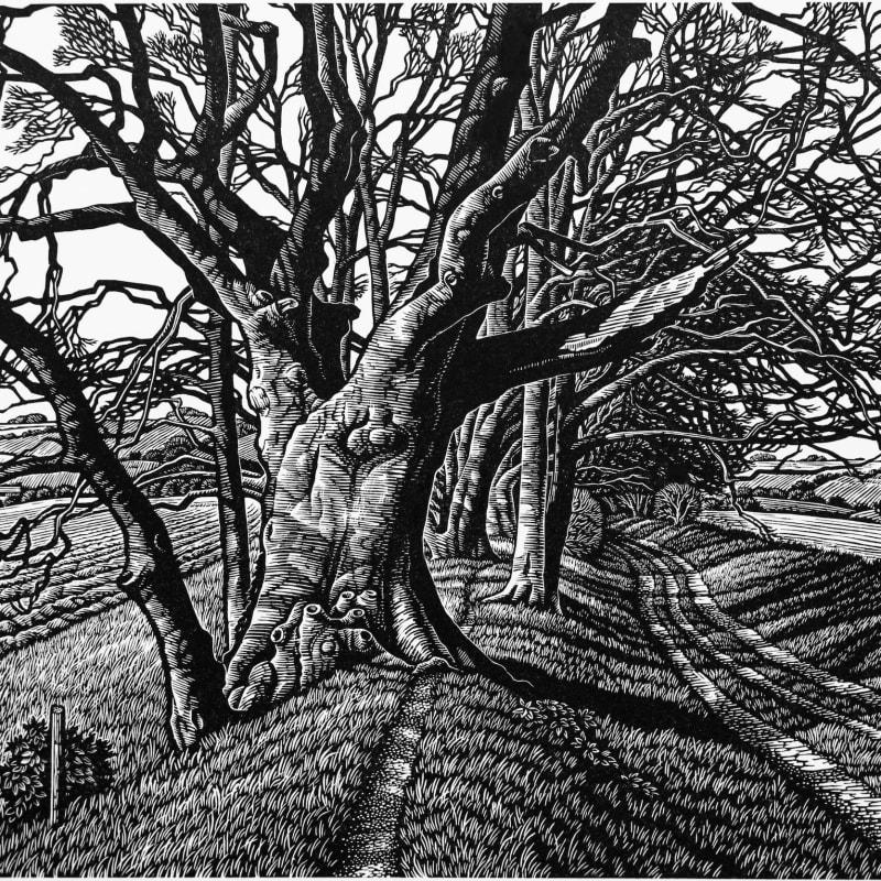 Howard Phipps ARE, Beech Tree Cloister