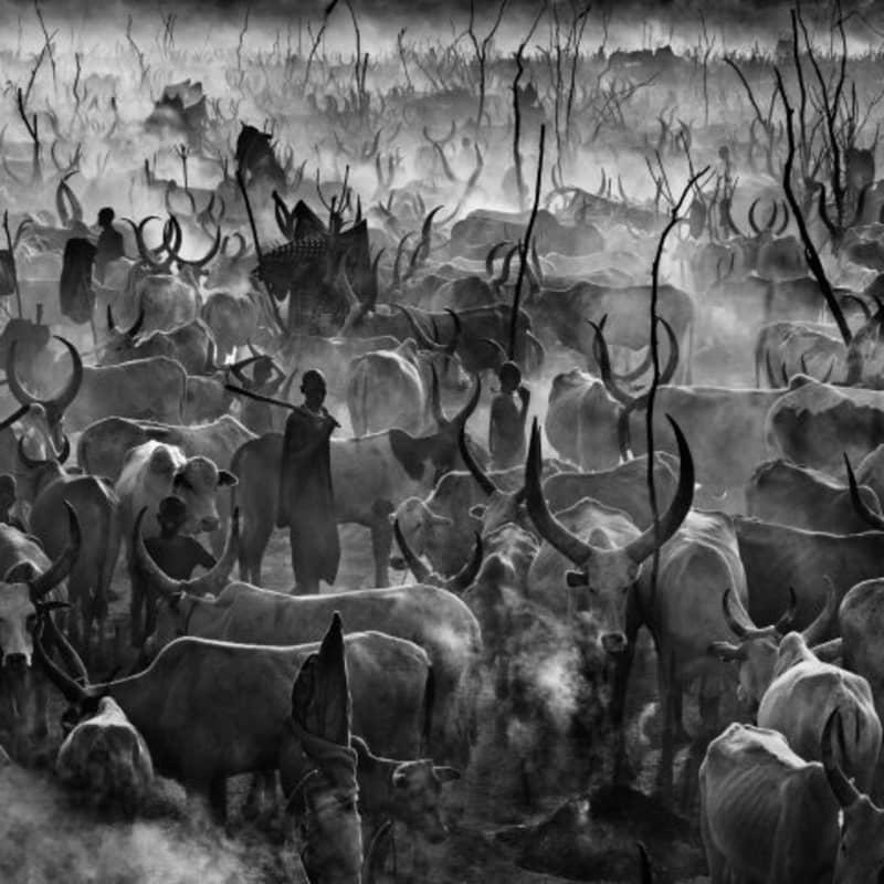 Artwork image: DAVID YARROW Mankind